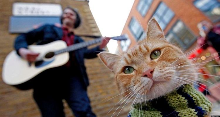 o-A-STREET-CAT-NAMED-BOB-facebook
